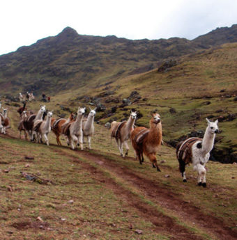 Trek Lares Machu Picchu 5 Días / 4 Noches